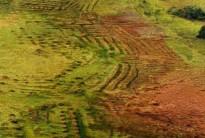 une histoire agricole de la Guyane : Cultiver sans bruler en Amazonie