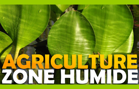 Agriculture Zone Humide