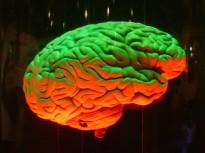 Cerveau d'Homme et cerveau de singe : de si petites différences…