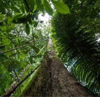 A venir : Conférence Arbres et Forêts