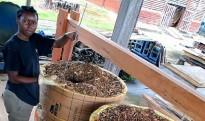 Fête de la science à Kourou : Visite du centre de recherche agronomique