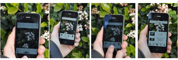Une appli mobile pour la flore guyanaise ?