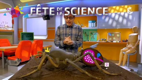 Projections : Myrméquoi? myrmécologue! / Le génie des fourmis