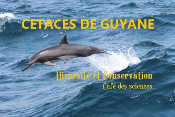 Diversité et conservation des cétacés en Guyane