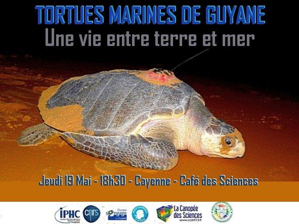 Tortues marines de Guyane