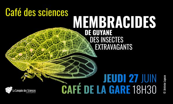 Café des Sciences, les membracides de Guyane