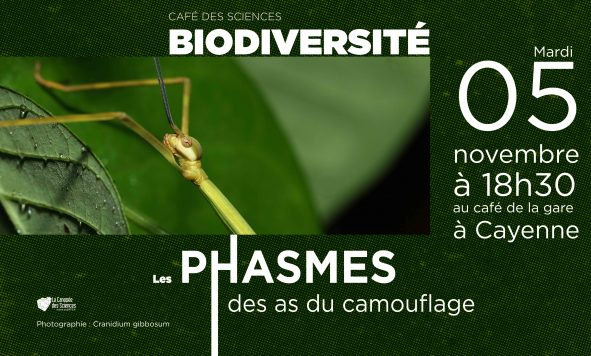 Café des Sciences – Phasmes de Guyane