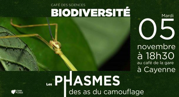 Café des Sciences - Phasmes de Guyane