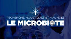 Interview de chercheur : moustiques, microbiotes et maladies