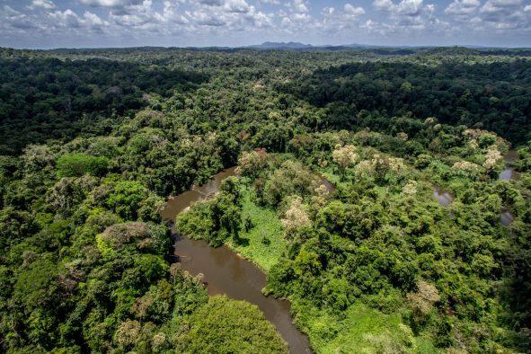 Observer l'eau aux Nouragues : le projet NOE