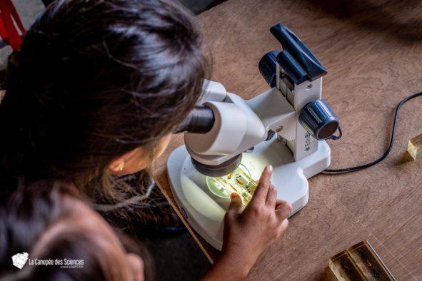Plongée microscopique