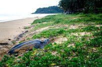 Entretien avec Tony Nalovic, ingénieur halieute au Comité des pêches de Guyane