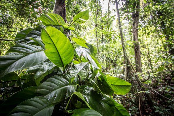 Wey Amazone : La réserve du mont Grand Matoury, la nature en sursis