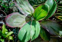 Flore de Guyane – un outils collaboratif