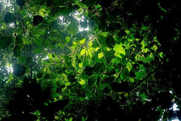 Colloque en ligne « Arbre, forêt, bois et sociétés » les 30 et 31 mars