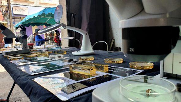 Sciences au marché – Cayenne & St Laurent