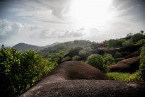 Rencontres au sommet de la forêt tropicale en Guyane